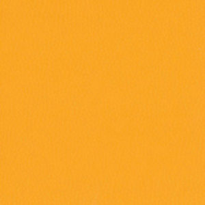 Dollaro-Pumpkin